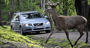 Volvo  Avoiding animals: Volvo is extending its collision avoidance programming to recognise errant wildlife such as deer.